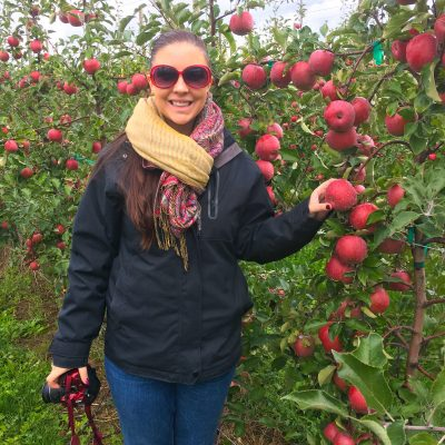 New York Apples: From Farm to Table