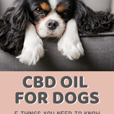 CBD Oil for Dogs – 5 Things You Should Know
