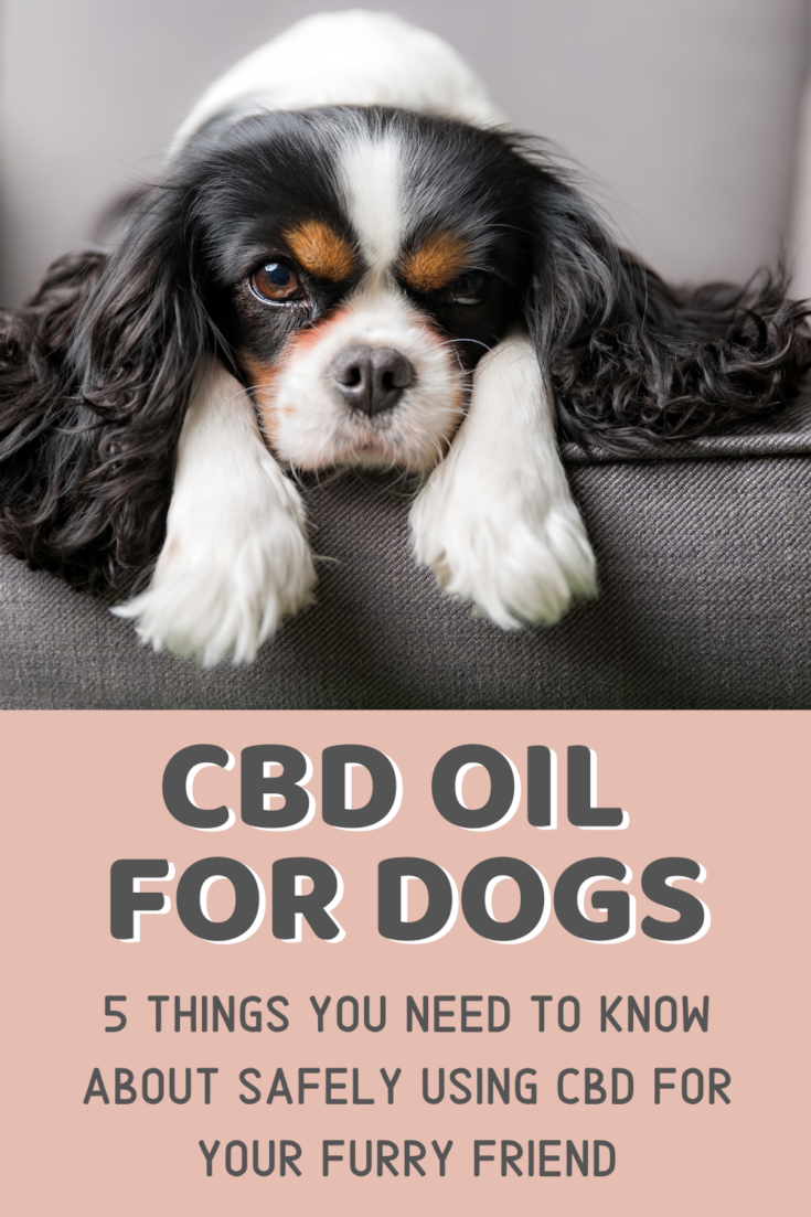 CBD Oil for Dogs - 5 Things You Should Know