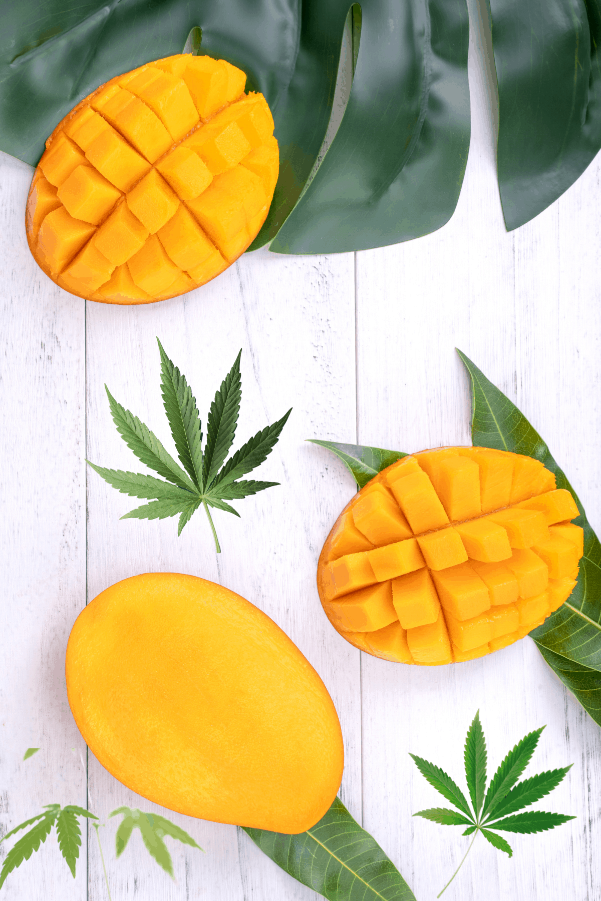 A white background with green tropical leaves topped with cut mango and cannabis leaves